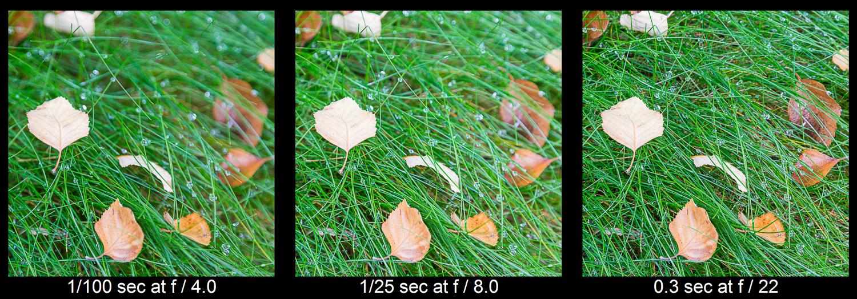 explorando a profundidade de campo com folhas na grama