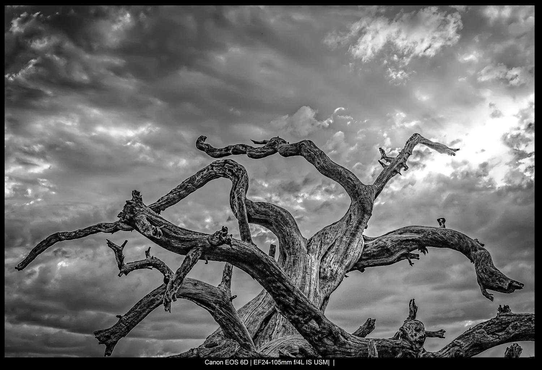 árvore íngreme com céu tempestuoso