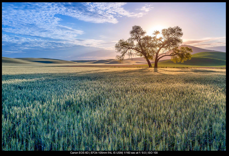 árvores com céu azul e grama