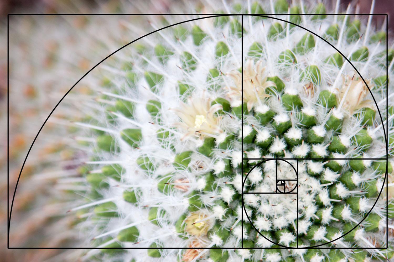 Composição da espiral dourada na fotografia.