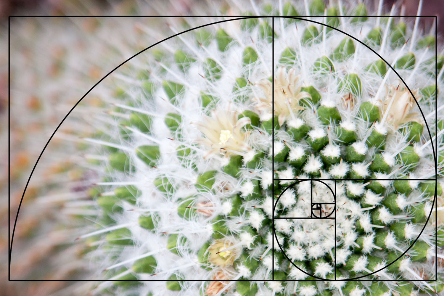 golden spiral composition in photography