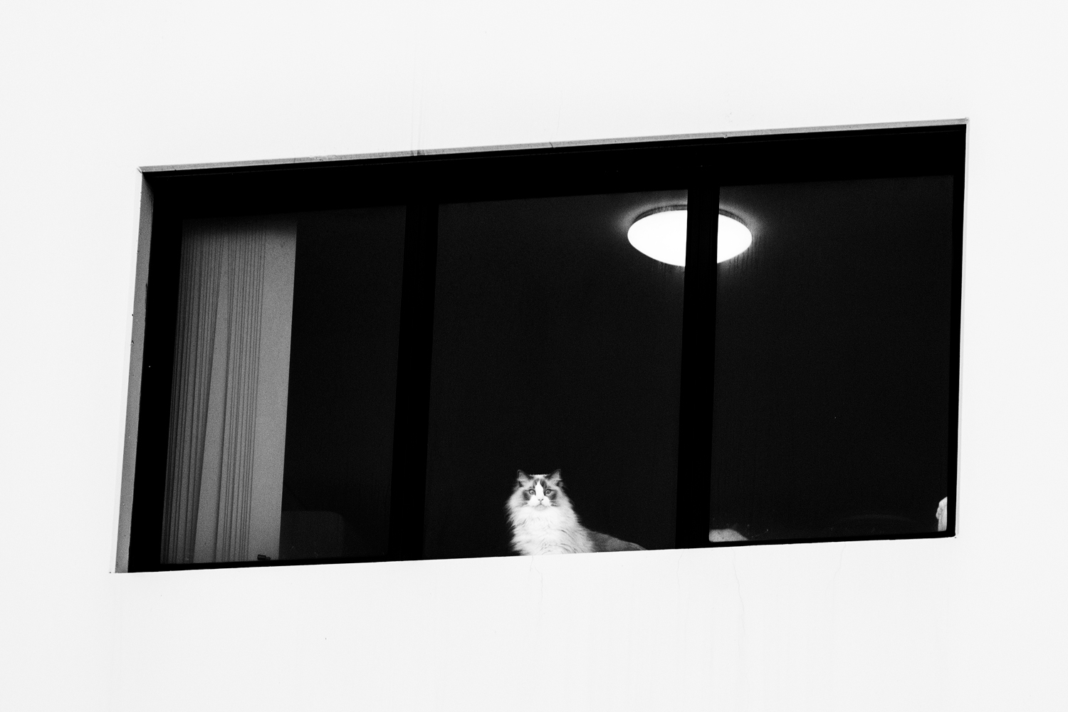 a cat in an apartment window rule of space in photography