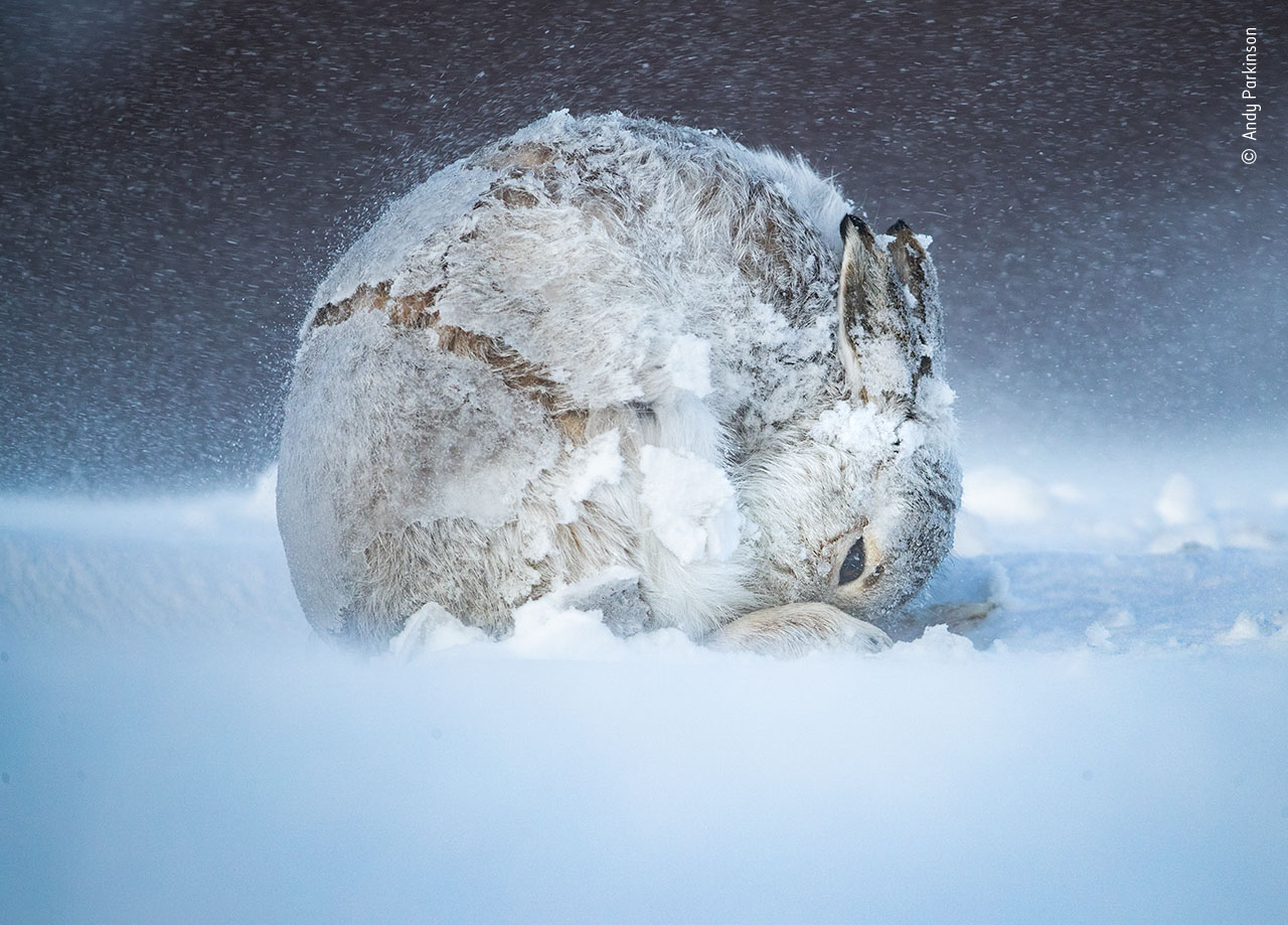 Andy Parkinson / Wildlife Photographer of the Year