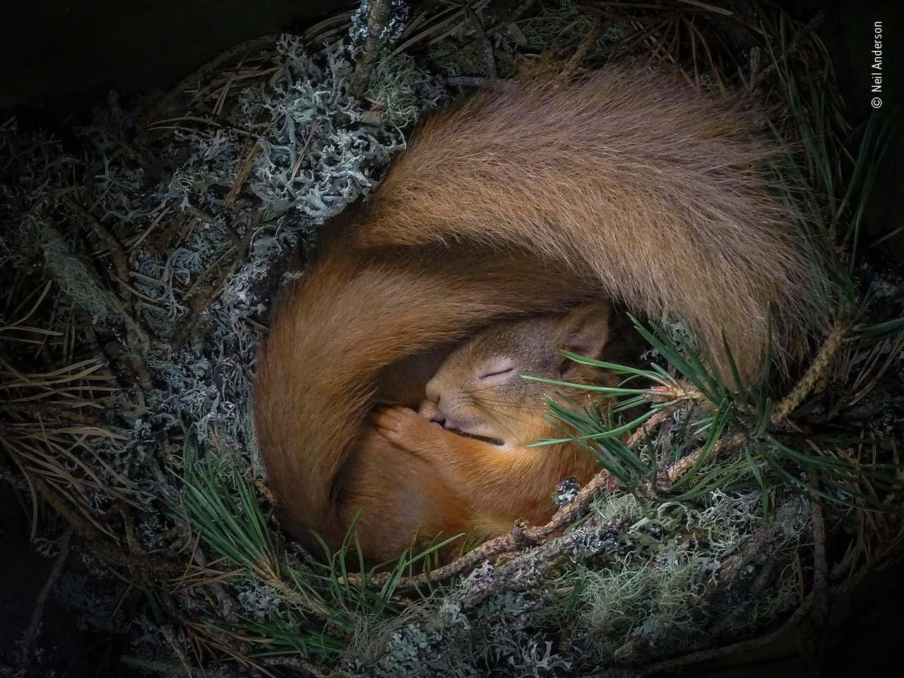 Neil Parkinson / Fotógrafo de Vida Selvagem do Ano