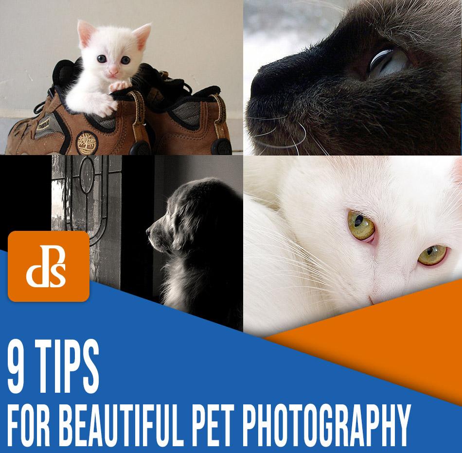 dicas de fotografia de animais de estimação