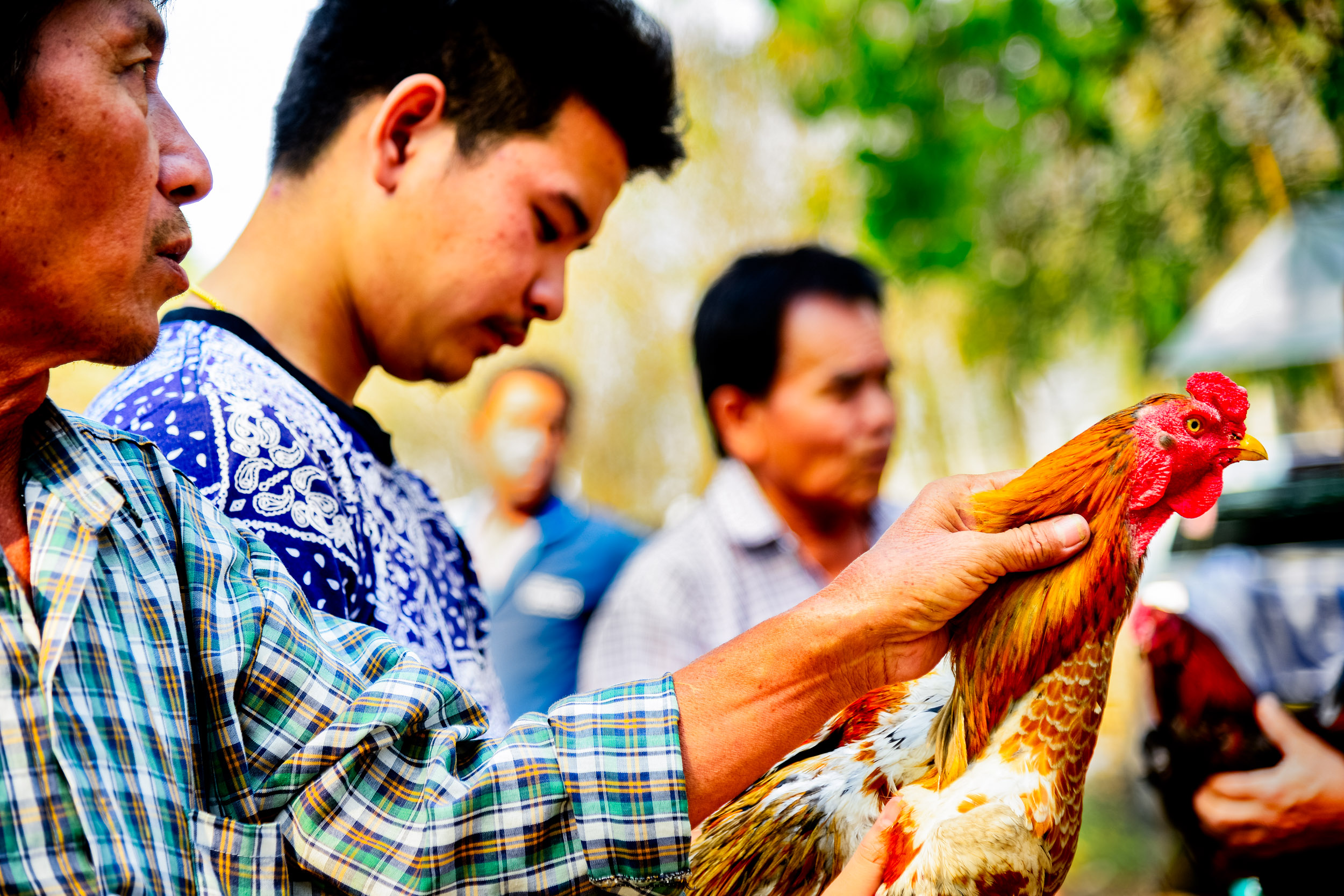 buying a rooster. Street photography ideas