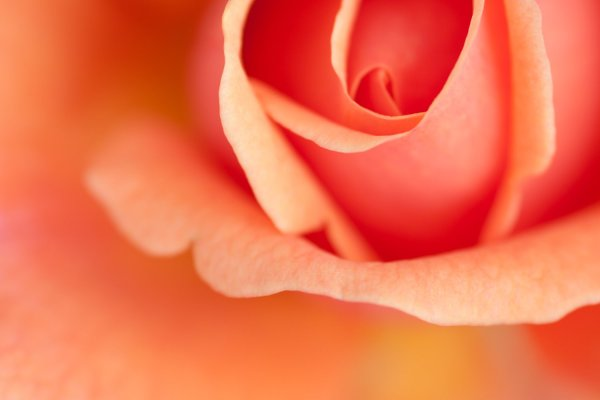 Macro Photography: The Complete Guide to Breathtaking Macro Images