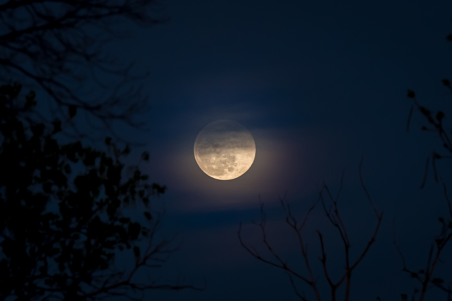Moon Photography Settings Clouds and Foreground Trees