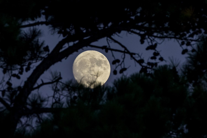 Moon Photography Settings Moon Behind Trees