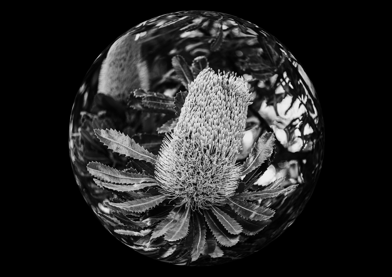 circular fisheye effect photo manipulation ideas