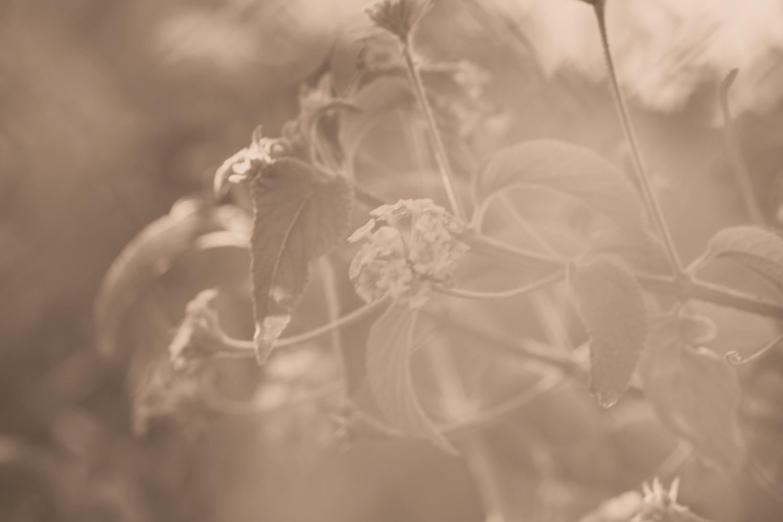 beautiful sepia leaves