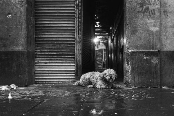 street photography image