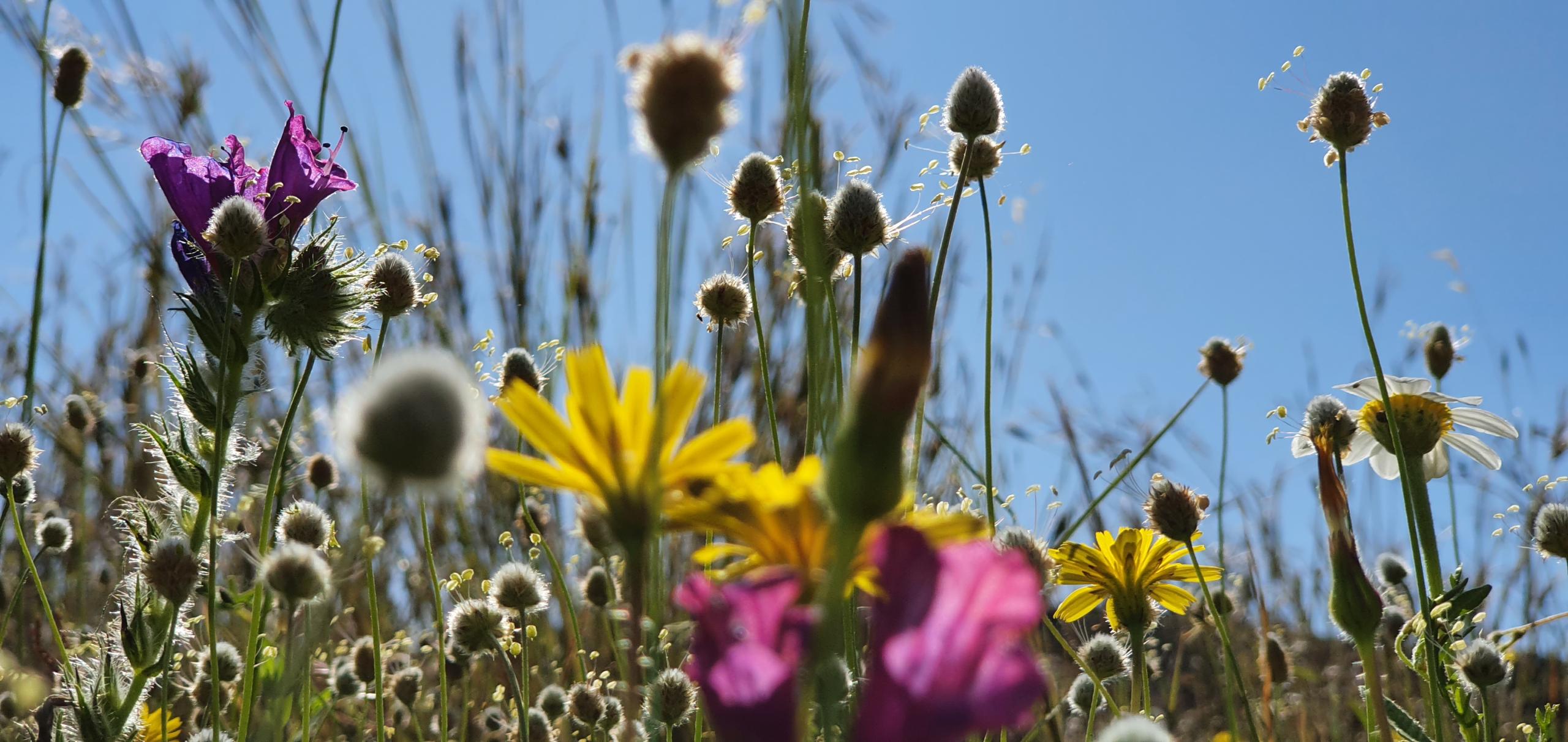 flowers against a blue sky phone photography ideas