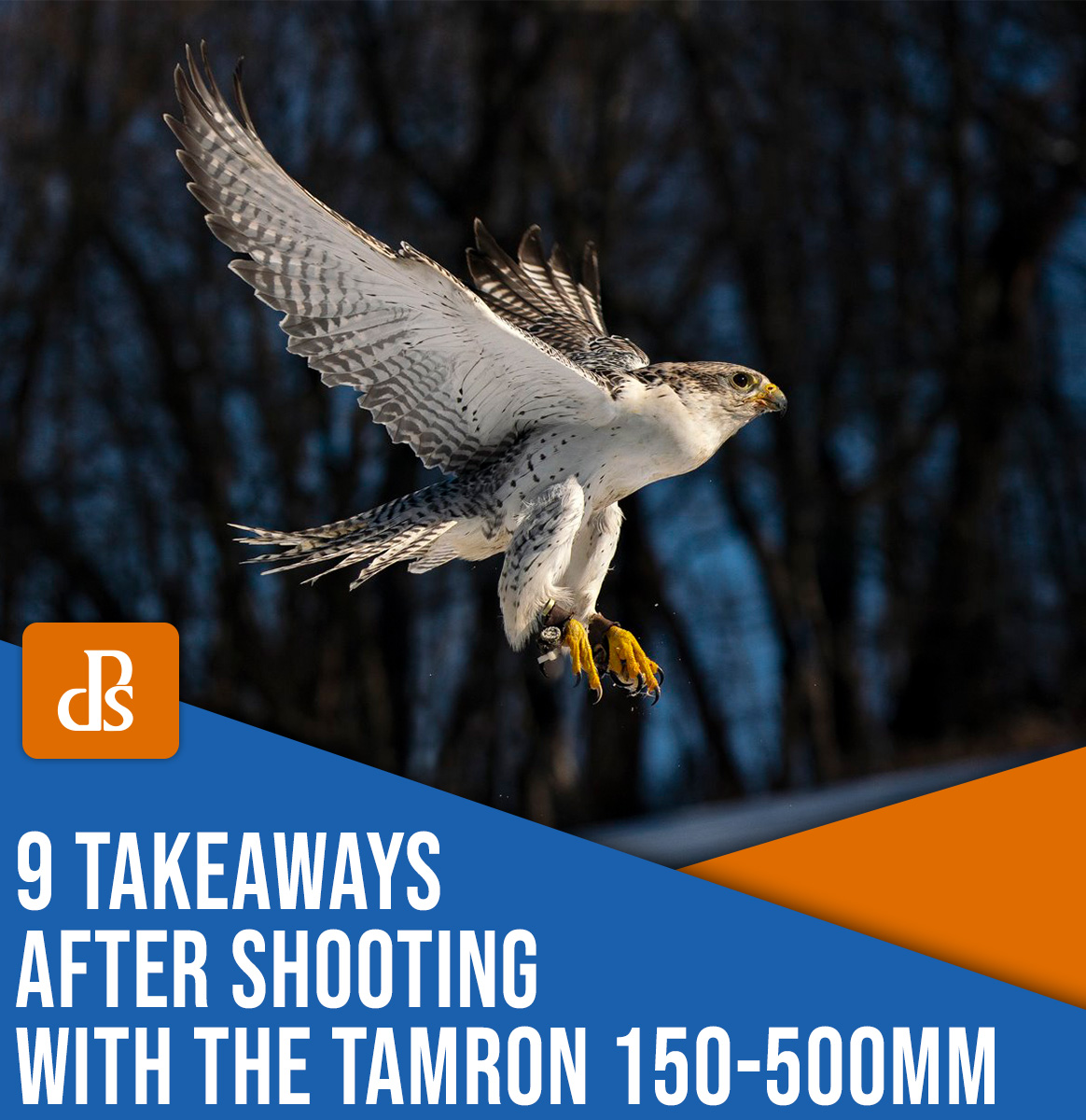 9 takeaways after shooting with the Tamron 150-500mm