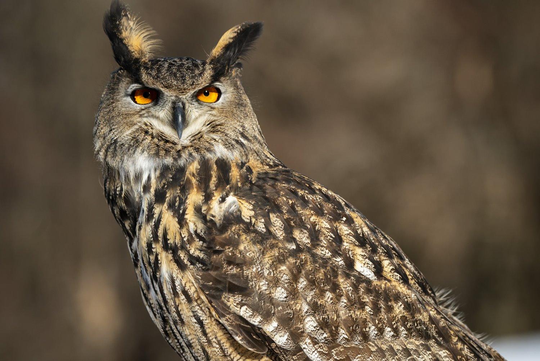 owl perching