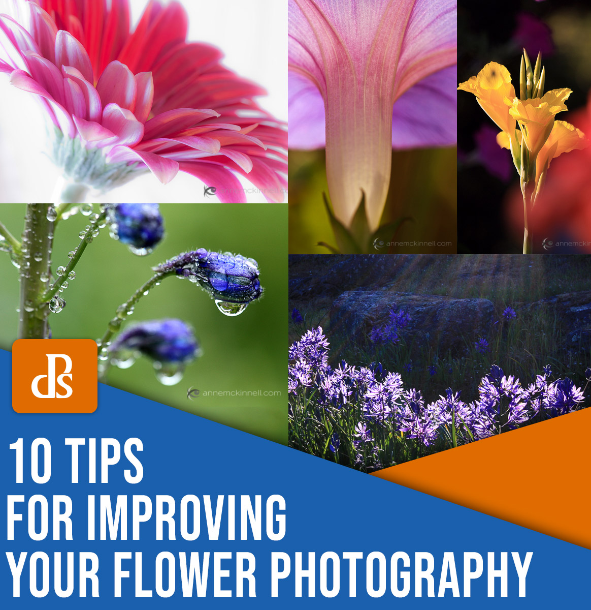 10 tips for improving your flower photography