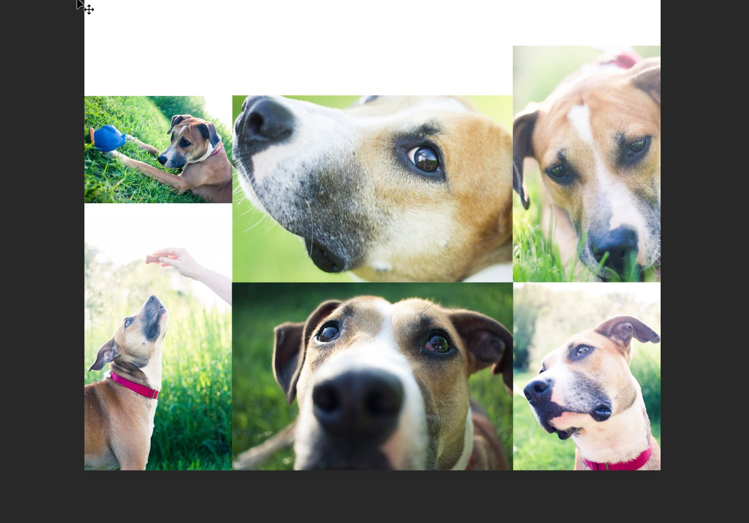 one version of the pet collage in Photoshop
