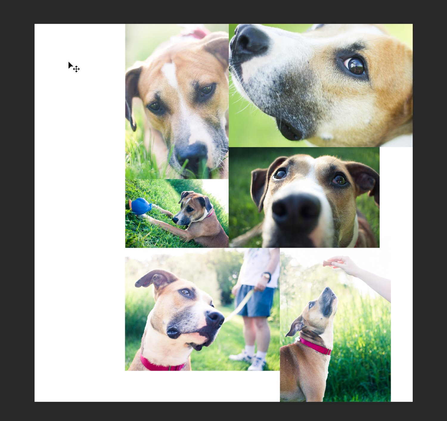 another version of the pet collage in Photoshop