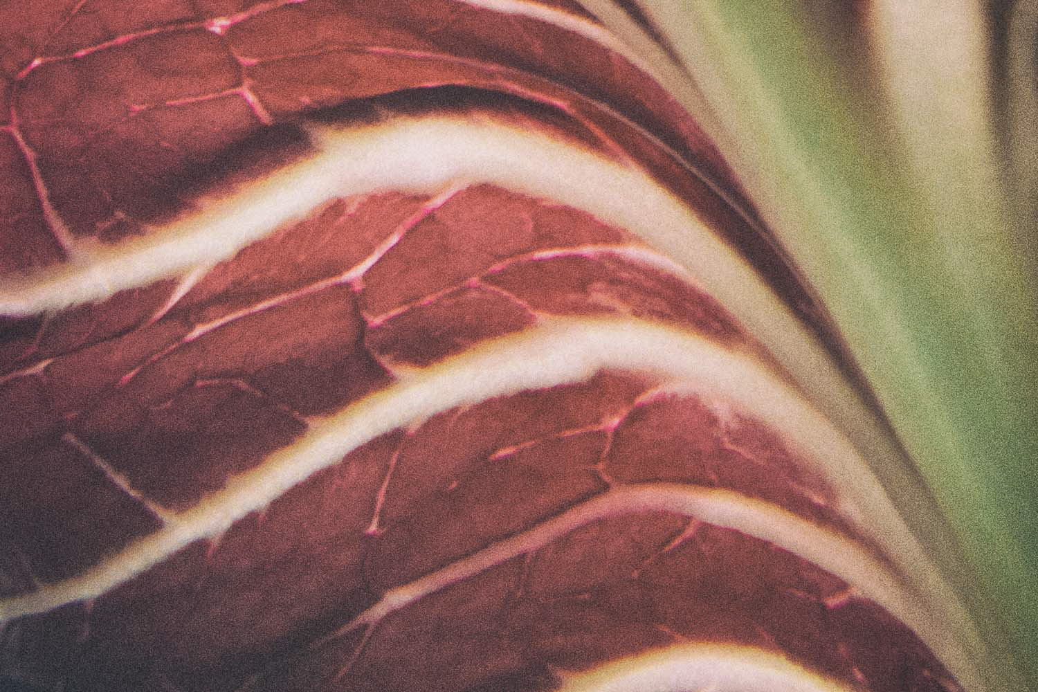 Vegetable photography textures