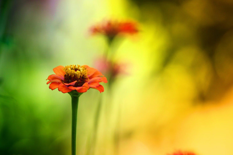 wide aperture close-up flower
