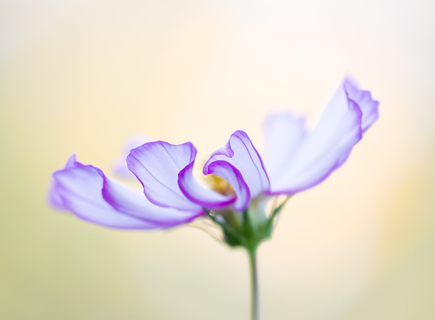 flower with a shallow depth of field effect