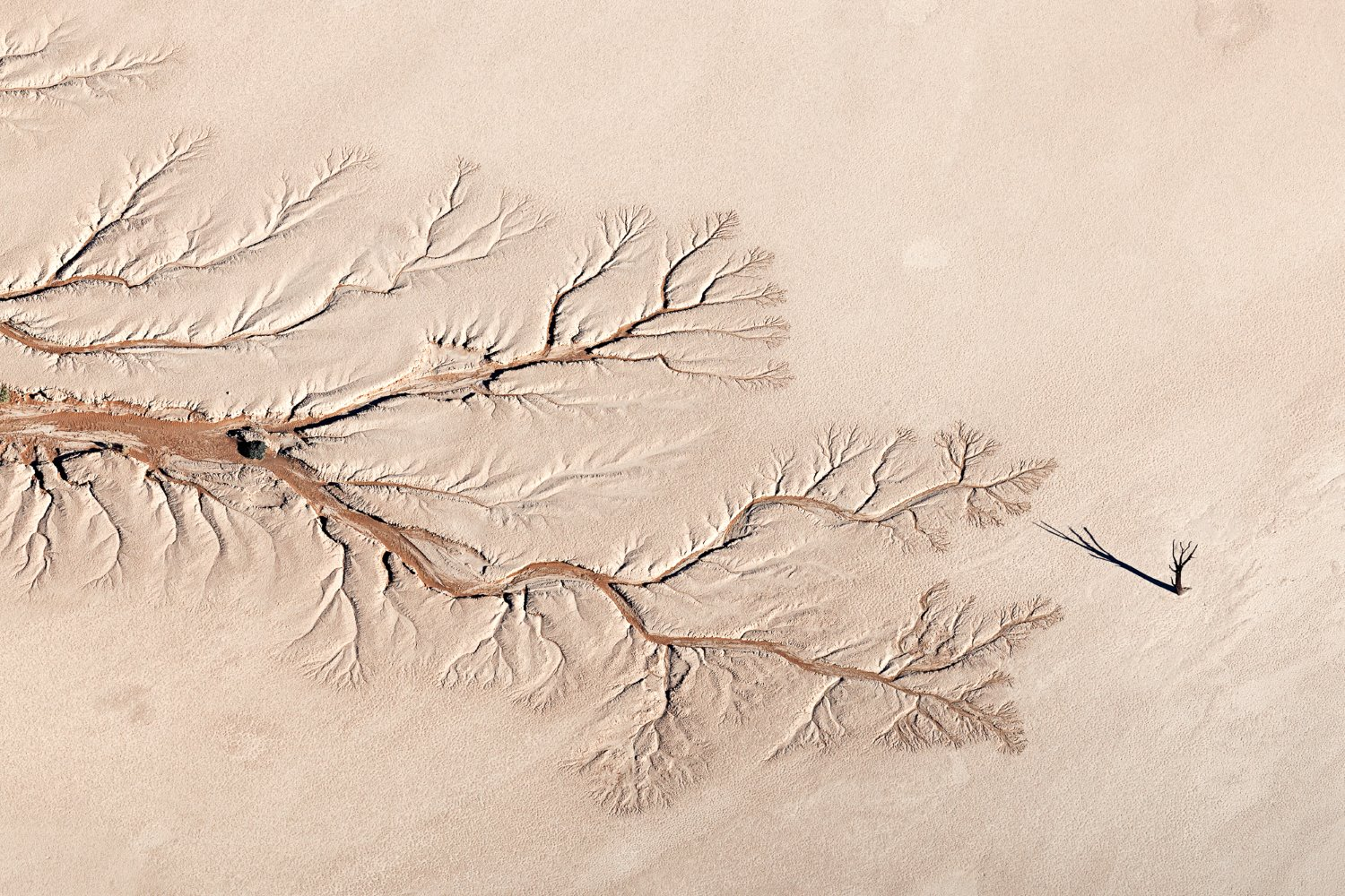 Nature TTL Photographer of the Year Winners