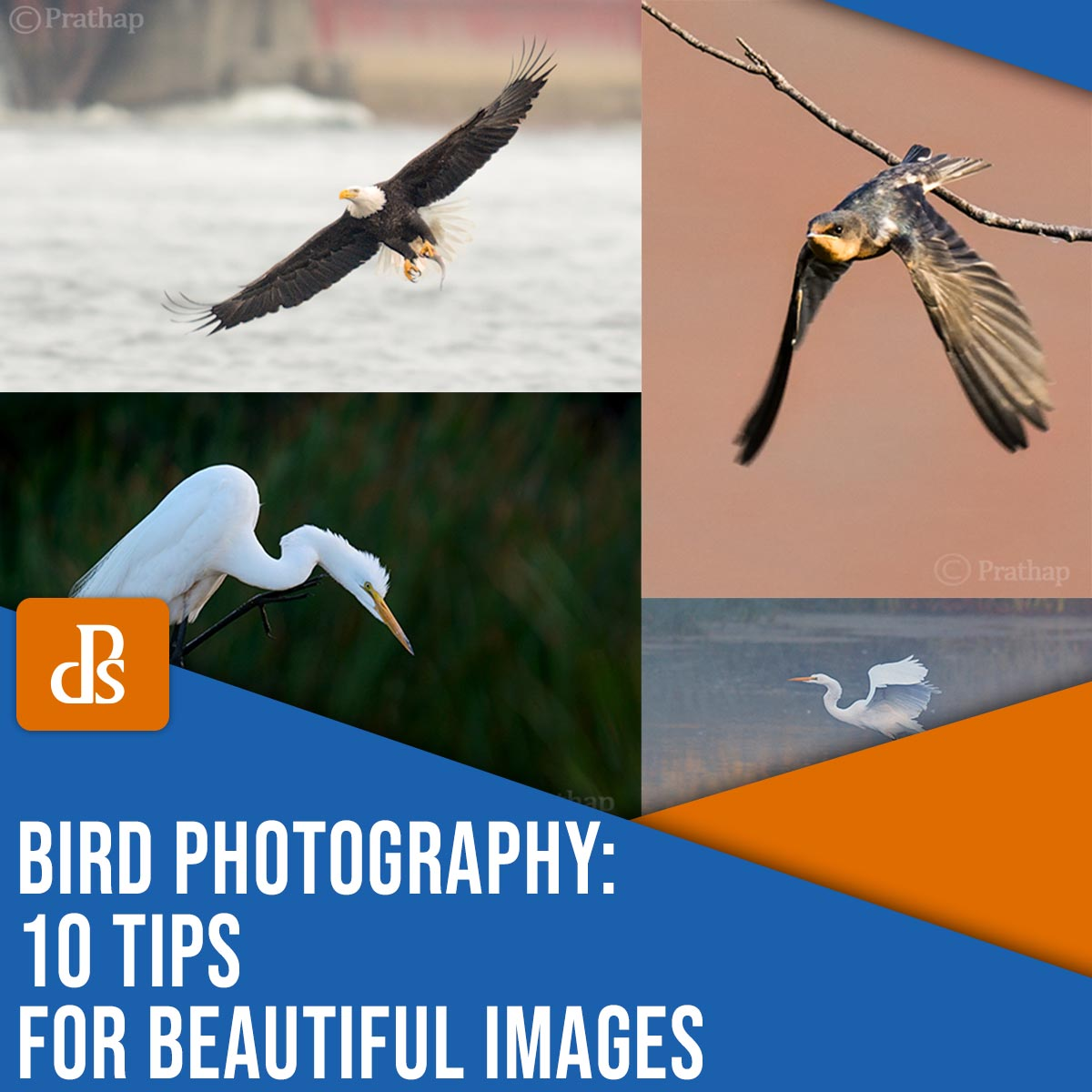 Bird Photography: 10 Tips for Beautiful Images