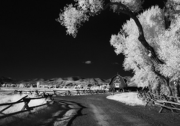 Image: By greg westfall