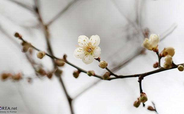 Image: By Republic of Korea