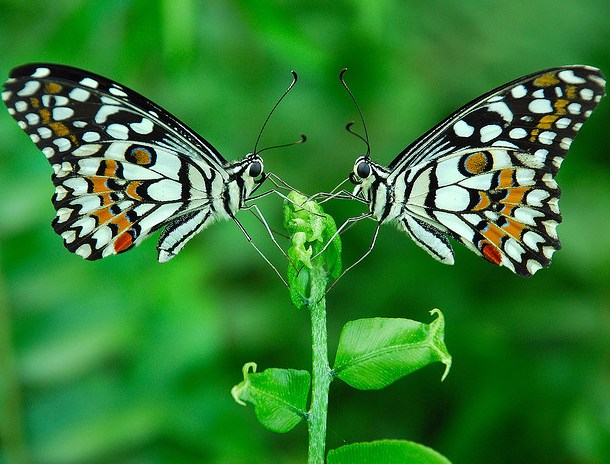 Image: By Prabhu B Doss