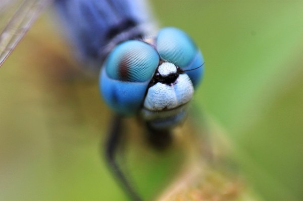 Equipment for Macro Photography – Video Tips