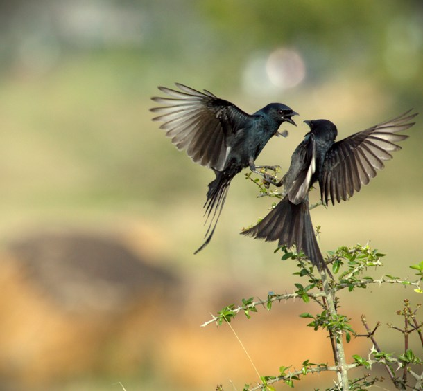 Image: By Vinoth Chandar