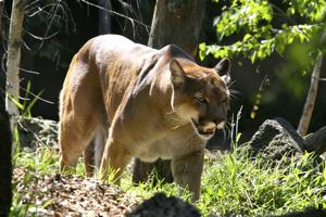 Zoo-Photography