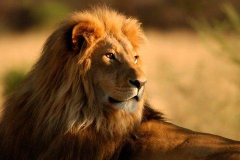 10 de agosto: Día Mundial del León.