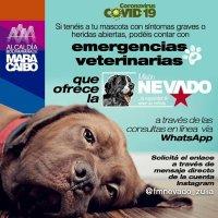 «Misión Nevado» Zulia habilita grupos de WhatsApp para emergencias veterinarias