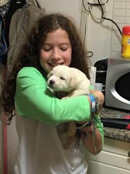 M&M get a new Lab puppy
