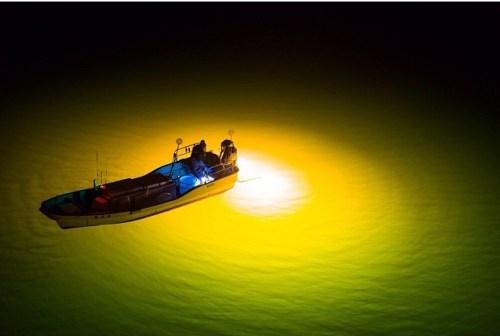 徳島の吉野川でのシラス漁の様子