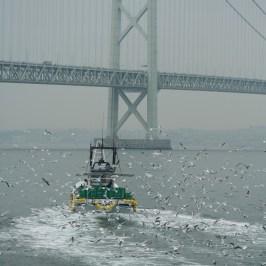 関西の春の訪れ:イカナゴ漁(解禁)の様子を写真撮影08