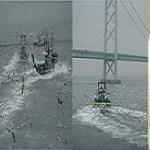 関西の春の訪れ:イカナゴ漁の様子を写真撮影