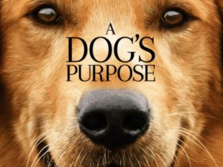 A DOG'S PURPOSE HDX VUDU DIGITAL COPY MOVIE CODE (READ DESCRIPTION FOR CORRECT REDEMPTION SITE) USA