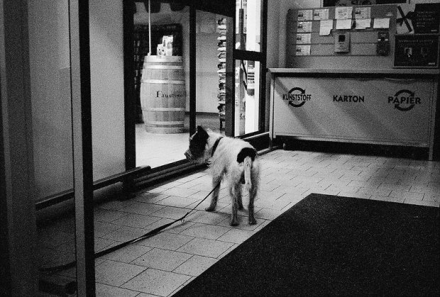 supermarket dog rewe