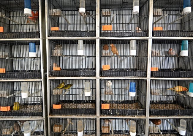 paris bird market france caged colorful birds Marche aux Oiseaux
