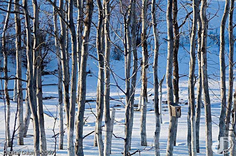 Winter Trees | ID 11165