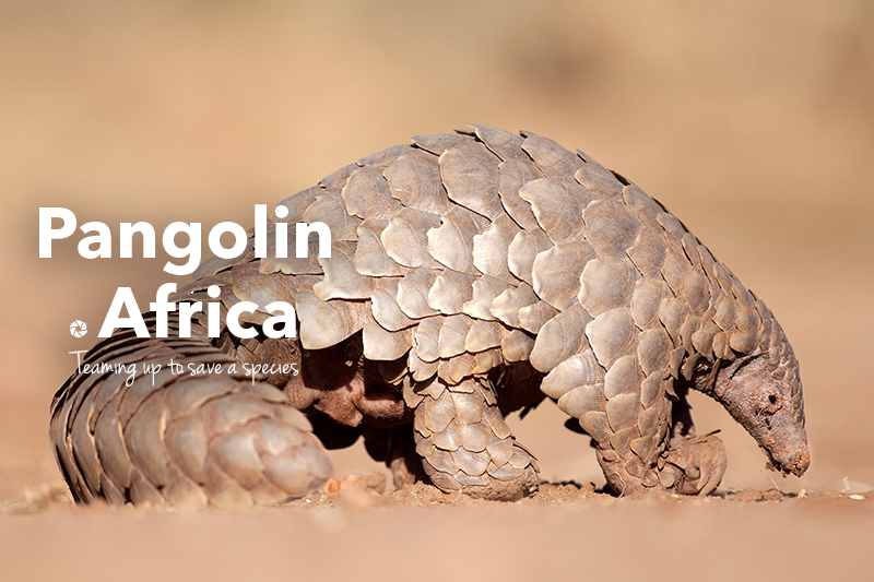 Digital Khaki – Pangolin Africa