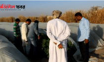 ওমানে বাংলাদেশীদের কৃষি বিপ্লব-Digital Khobor