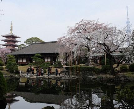 FUJIFILM X100S 浅草寺庭園と隅田公園の桜と東京スカイツリー