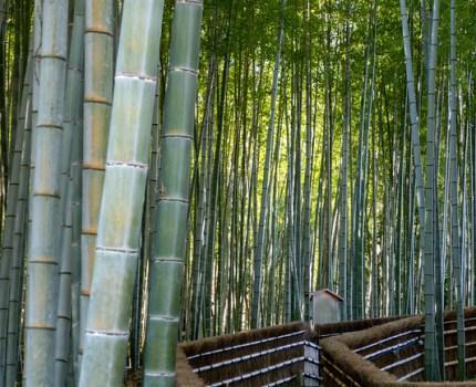 京都 嵐山 嵯峨野 苔と竹と梅