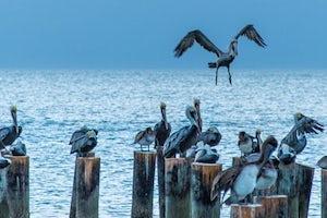 birds in naples on water