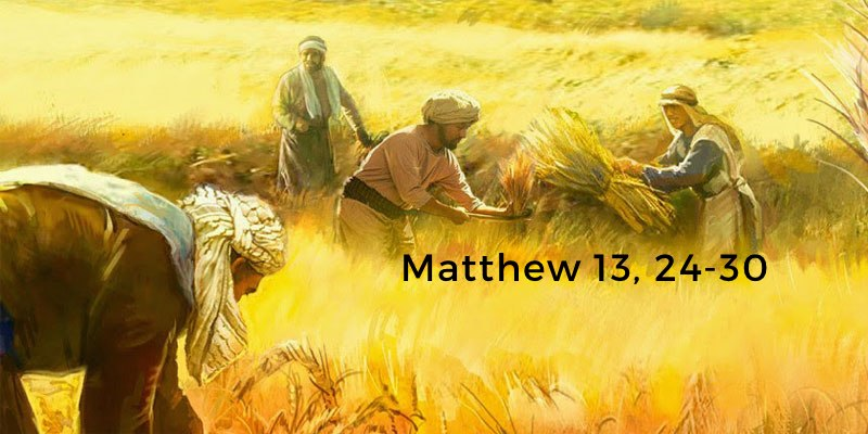 Matthew 13, 24-30 | Digital Catholic Missionaries (DCM)
