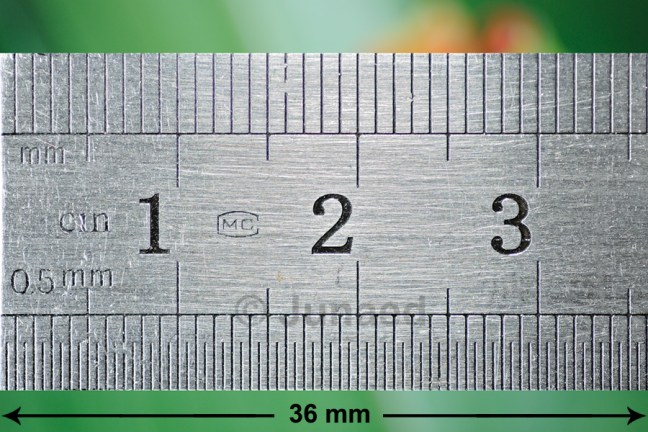 Ruler - 36mm